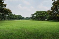 Landskapgräsmatta med träd Arkivfoto