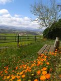Landskapgräsplan och apelsin Arkivfoton