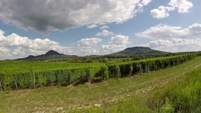 Landskaplängd i fot räknat med den GoPro handlingkammen från en vingård lager videofilmer