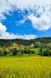 Landskapland i Thailand Royaltyfria Bilder