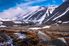Landskapnaturen av bergen av Spitzbergen Longyearbyen Svalbard på en polar dag med arktisk blommar i sommaren Royaltyfri Foto