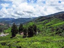 Landskappanoramasikt av fältet på berget Royaltyfri Bild