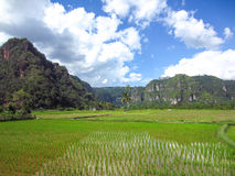 Landskappanoramasikt av fältet på berget Arkivbild