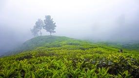Landskappanoramasikt av fältet på berget i dimma Royaltyfri Foto