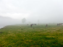 Landskappanoramasikt av fältet på berget i dimma Royaltyfria Foton