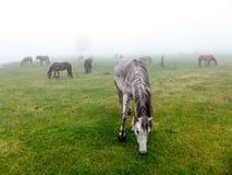 Landskappanoramasikt av fältet på berget i dimma Fotografering för Bildbyråer