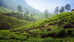 Landskappanoramasikt av fältet på berget i dimma Royaltyfria Bilder