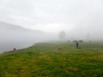 Landskappanoramasikt av fältet på berget i dimma Royaltyfri Fotografi