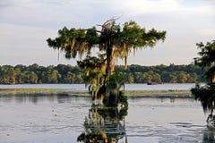 Landskapplats för sen eftermiddag i sjön Martin Louisiana Fotografering för Bildbyråer