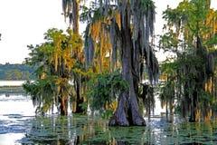 Landskapplats för sen eftermiddag i sjön Martin Louisiana Royaltyfri Bild