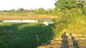 Landskapsikt av dammet Fotografering för Bildbyråer