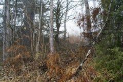 Landskapsikt av den tilltrasslade höstskogsmarken Arkivbild