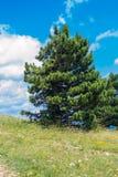 Landskapsikt av det platåAi-Petri berget Royaltyfri Foto