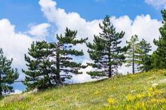 Landskapsikt av det platåAi-Petri berget Arkivbild