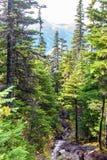 Landskapsikt av en ström som omges av alpina träd och berg i bakgrunden royaltyfria bilder