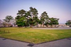Landskapsikt av gräsmattan med träd Arkivfoton