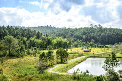 Landskapsikt av pinjeskogchiangmaien Thailand Arkivfoto