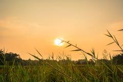 Landskapsikt med solnedgångtider Royaltyfri Bild