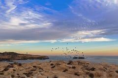Landskapsolnedgångsikten av Rock dök fåglar som flyger på udde Dombey I Royaltyfri Foto