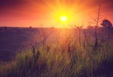 Landskapsoluppgång på sommar Dimmig morgon på äng Arkivbilder