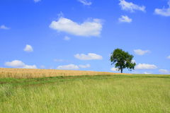 landskapsommar Fotografering för Bildbyråer