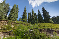 Landskapsommar i berg Royaltyfri Foto