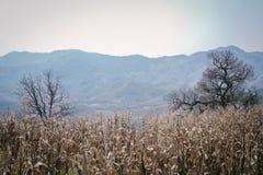 Landskapsommar på berget Arkivbild