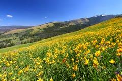 landskapsommar yellowstone Arkivfoto