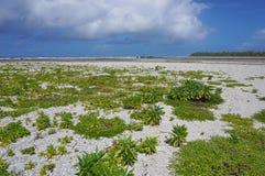 LandskapTikehau atoll Tuamotu franska Polynesien royaltyfri foto