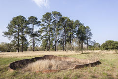 Landskapträd fördärvar Arkivbild