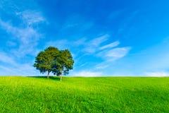 Landskapträd i klar gräsplan- och blåttnatur Arkivfoton