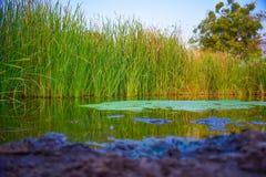 Landskaptree& x27; full natur för s-skönhet Royaltyfri Fotografi