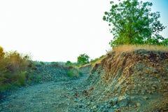 Landskaptree& x27; full natur för s-skönhet Arkivbild