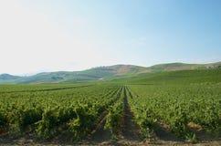 Landskapvingårdar i Sicilien Royaltyfri Bild