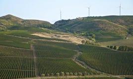Landskapvingårdar i Sicilien Royaltyfri Foto