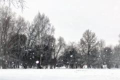 Landskapvintern parkerar träd arkivfoto