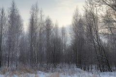 Landskapvinterskog Royaltyfri Bild