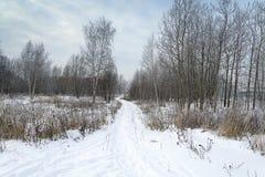 Landskapvinterskog Royaltyfri Foto