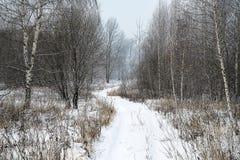 Landskapvinterskog Arkivfoton