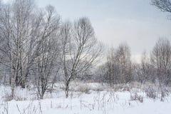 Landskapvinterskog Fotografering för Bildbyråer