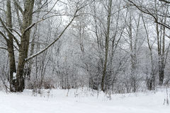 Landskapvinterskog Arkivfoto