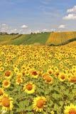 Landslandskap i gränser (Italien) Royaltyfri Fotografi