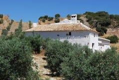 Lantbrukarhem- och olivdunge, Olvera, Spanien. arkivfoton