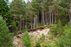 Landslide Stock Image