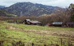 Landsliv Kalifornien i kullarna fotografering för bildbyråer