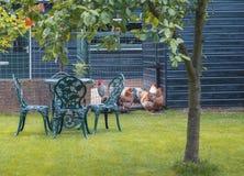 Landsliv på den typiska trädgården för holländare Royaltyfria Bilder