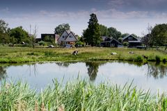 Landsmeer. Small village in the Netherlands, with water and goats in pasture stock photos