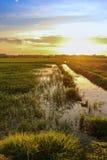 Landspace-Ansicht über Reisfeldplantage im Sonnenuntergang Stockfoto