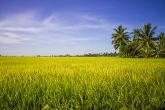 Landspace sikt över koloni för risfältfält Arkivfoto