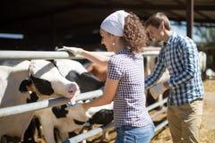 Landspar av bönder som poserar med exponeringsglas av, mjölkar på cowfarm Fotografering för Bildbyråer